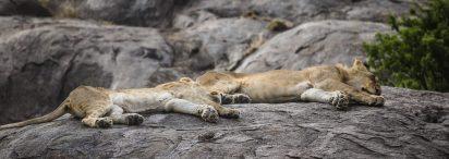 Safari Day 3-52