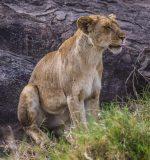 Safari Day 3-53