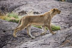 Safari Day 3-56