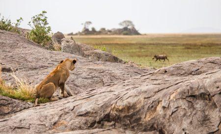Safari Day 3-65