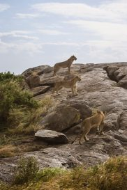 Safari Day 3-66
