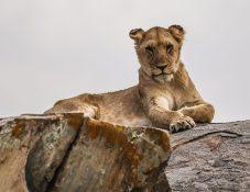 Safari Day 3-84