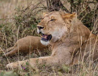Safari Day 4-57