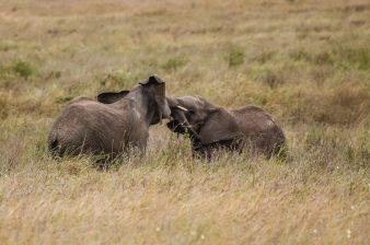 Safari Day 4-59