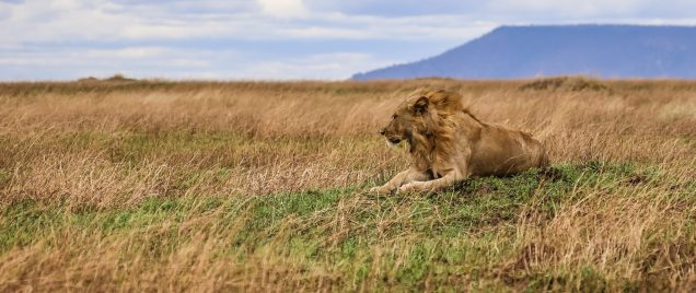 Safari Day 4-74