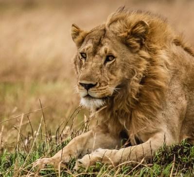 Safari Day 4-76