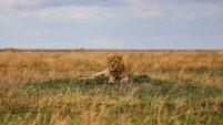 Safari Day 4-79