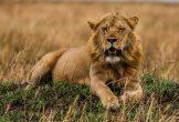Safari Day 4-87