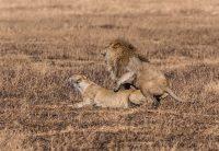 Safari Day 5-28