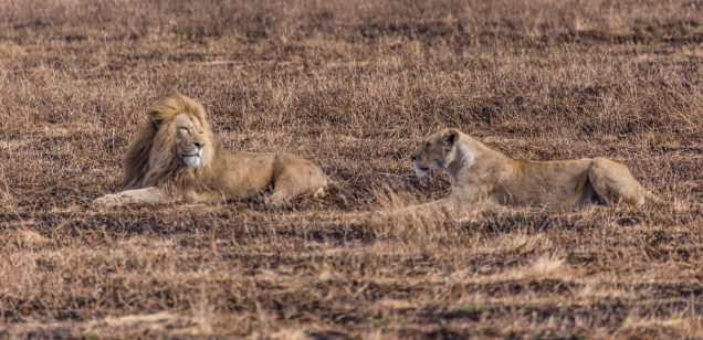 Safari Day 5-39