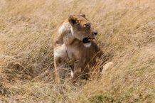 Safari Day 5-49