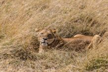 Safari Day 5-50