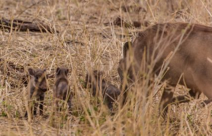 Safari Day 7-9
