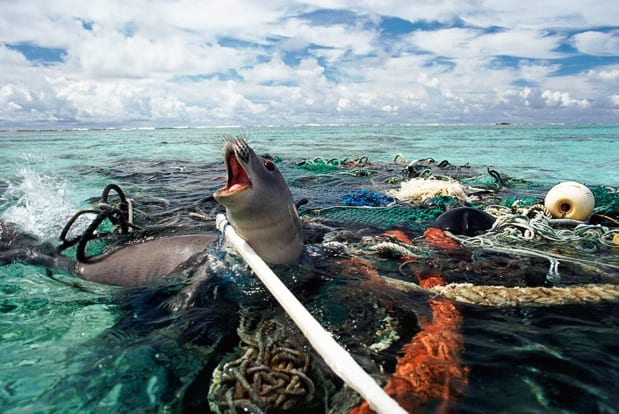 The War on Plastic