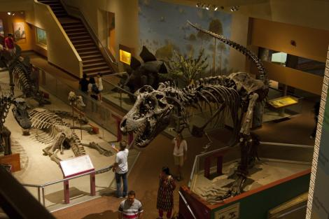 Photo: Smithsonian National Museum of Natural History Hall of Fossils in 2010. Photo by pcouture.