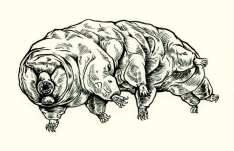 tardigrade drawing