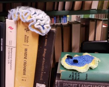 Wooly sea slugs exploring the Science Library. Image credit: Rosemary Wills