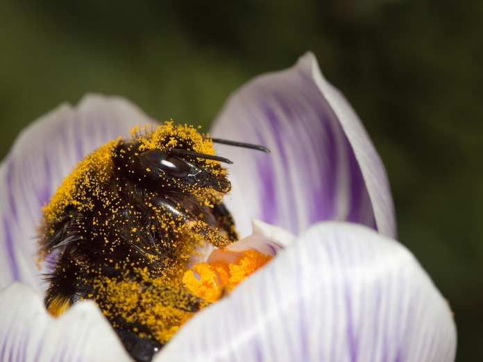 The Power of Pollinators – More than Just Honey
