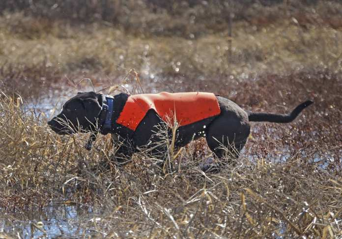 Pooper Snooper: Four-legged conservation heroes at work