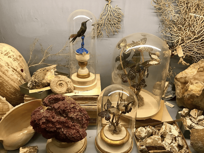 In Defense of Natural History Museums