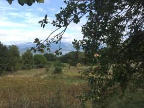 apples and vineyard