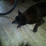 FitOldDog's deceased dog Nickel, FitOldDog loved Nickel,