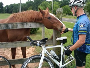 sore feet: Horses, animals, quality of life, FitOldDog's advice, cycling,
