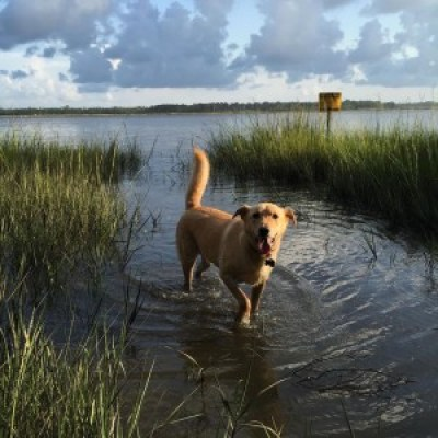 FitOldDog's dog Willbe in the Wetlands.