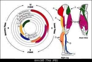 nociceptive foot pain