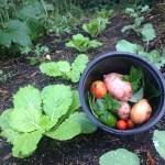 Easy Vegetable Gardening With Aortic Disease