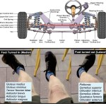 To Keep Moving as You Age Understand Your Steering Gear