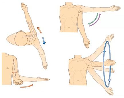 Anatomia îmbinării umărului umăr