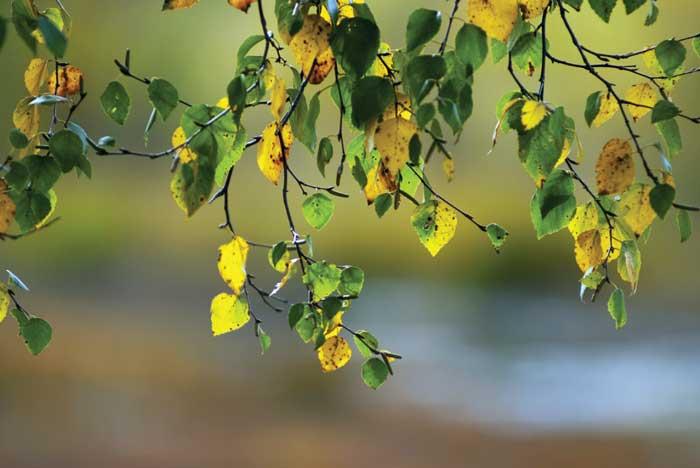 CSU Extension: Trees need love too