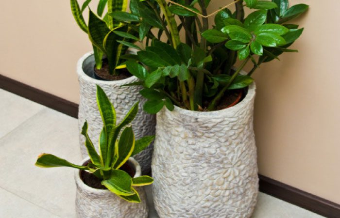 Houseplants save the day