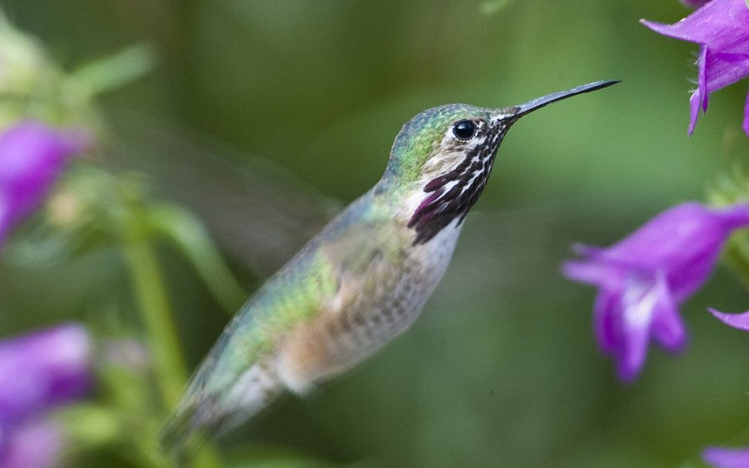 home garden Hummingbirds fun for garden