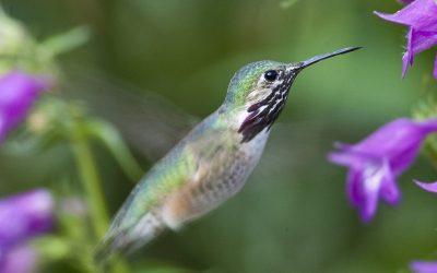 home garden Hummingbirds fun for garden