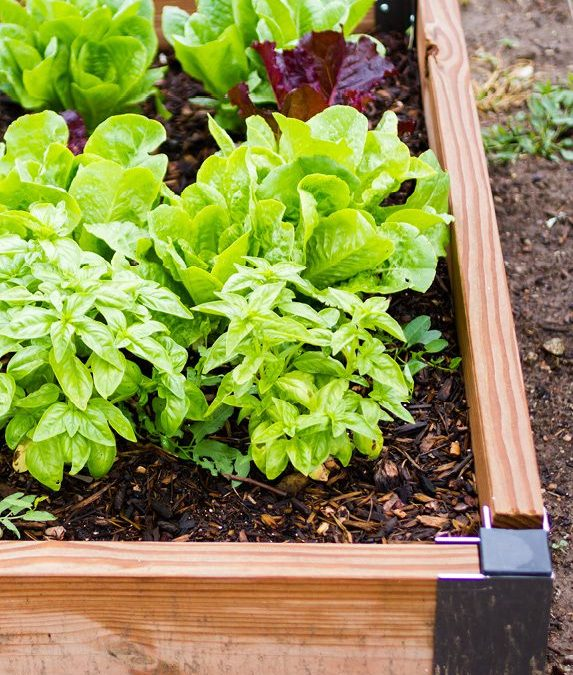 Grow and Give Offers Free Online Vegetable Gardening Course