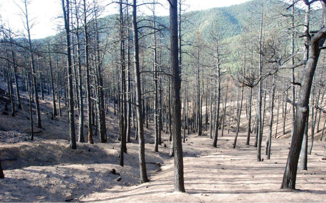 Colorado Natural Disasters: Ready, Set, Evacuate