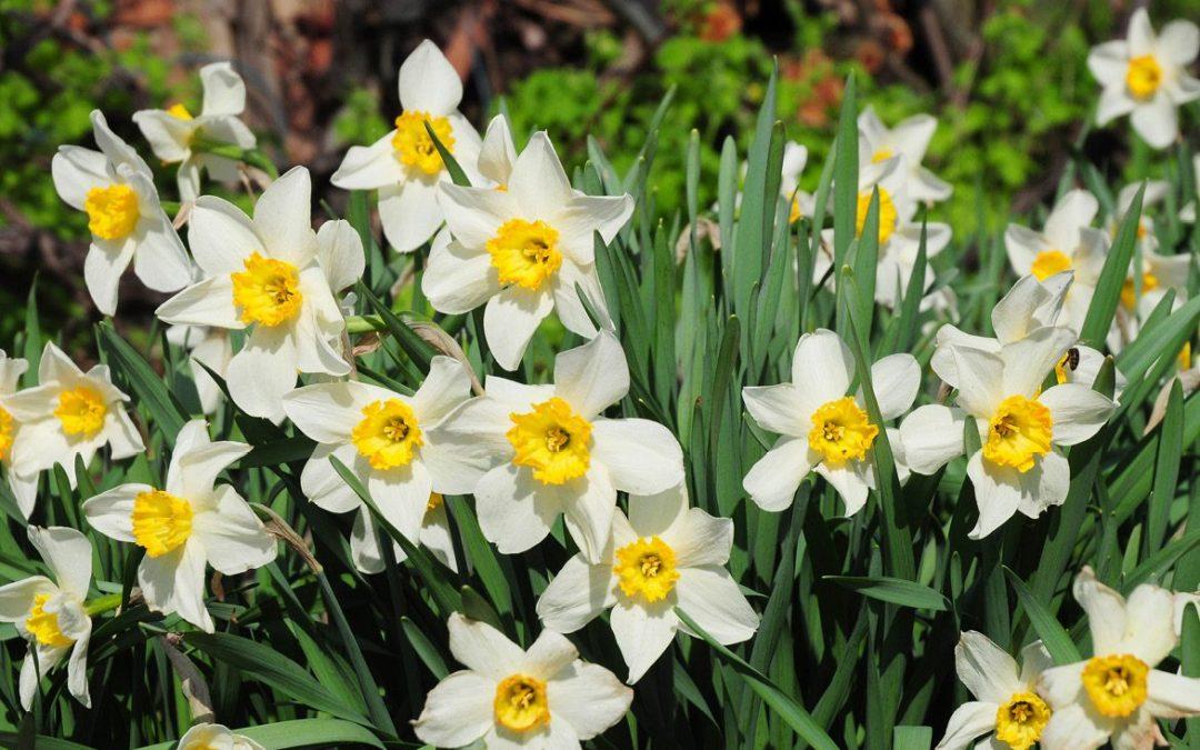 How to design a stunning spring garden