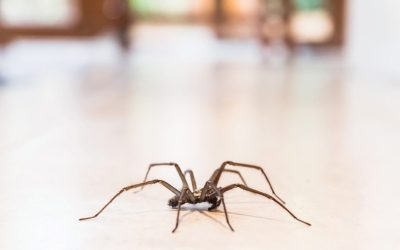 The Lighter Side: The creatures around our homes that freak us out