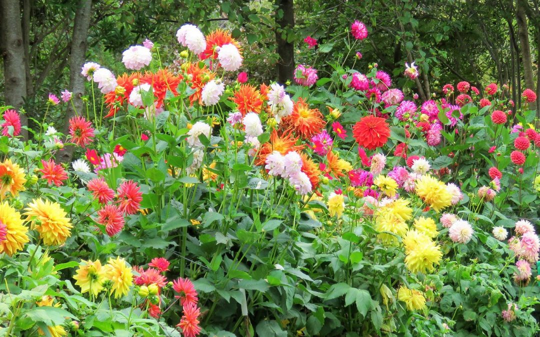 Plant summer bulbs now for splash of color this season