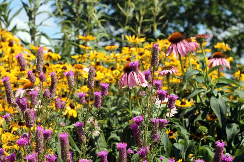 Plant a low maintenance garden to increase your Colorado property's value
