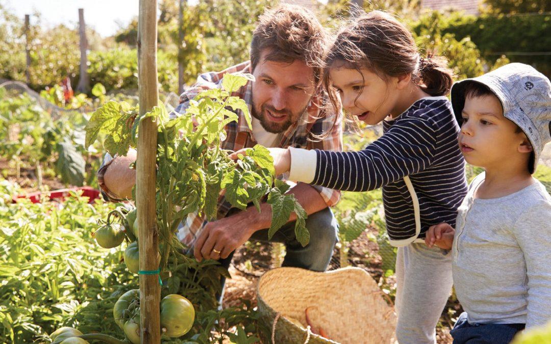 Home gardening takes off during coronavirus pandemic years