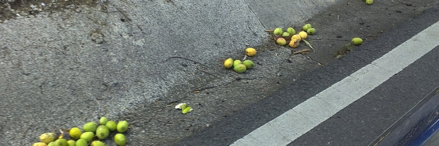 mangoes on the side of the road in puerto rico
