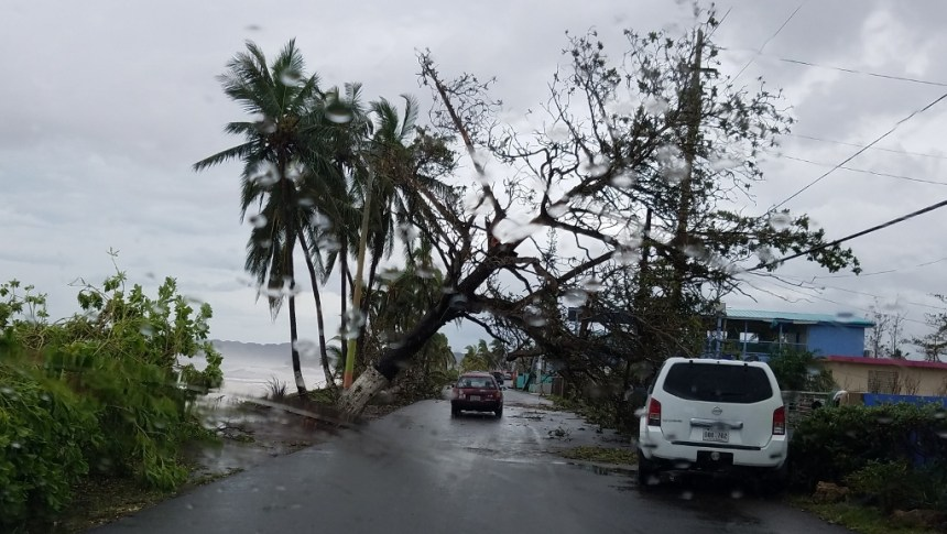 hurricane maria experience puerto rico tree over road