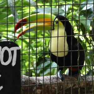 Road Trip Belize Travel Tips - Toucan