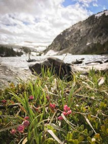 Montana's Absaroka-Beartooth Wilderness Trails