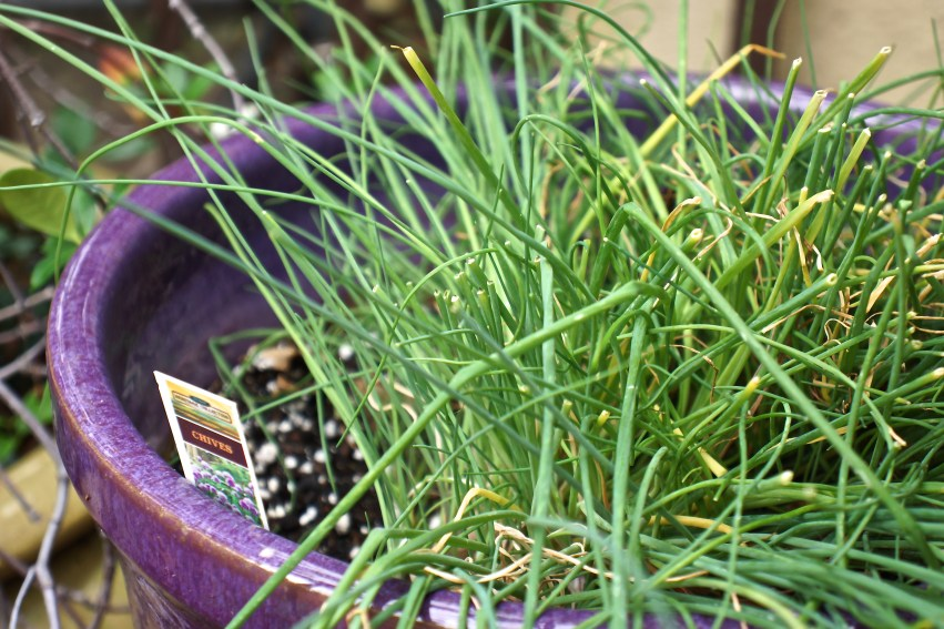 Don't skimp on the chives!