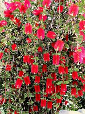 Northern California Plants
