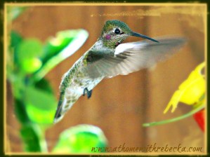 WORDLESS WEDNESDAY – Photography Hummingbirds Part 2